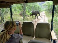 Elephant in Entabeni Game Reserve