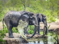 Elephants in Manyeleti Game Reserve